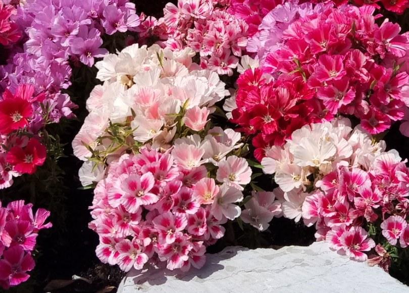 שתילת פרחים וצמחים