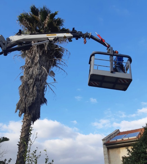tree cutting with a crane
