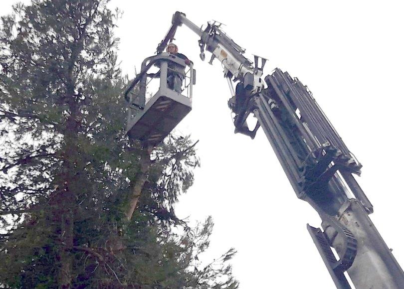 קריתת עצים עצים גבוהים עם מנוף גבוה